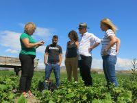 Herramientas digitales para una granja orgánica