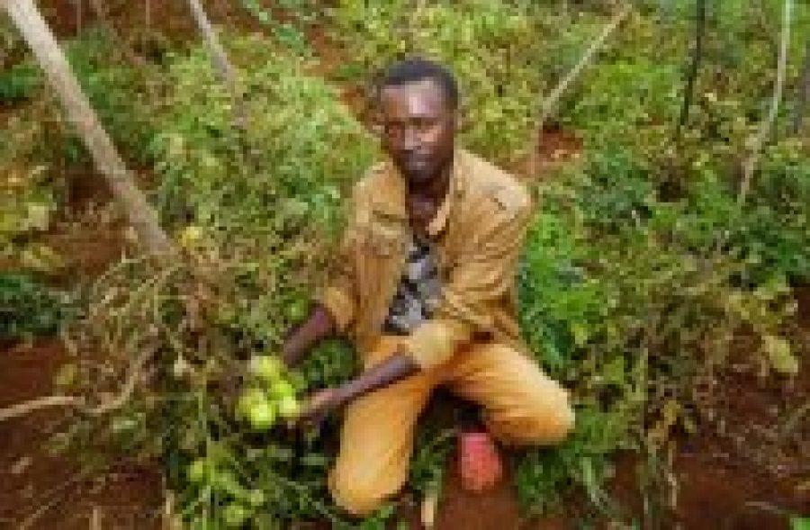 Los jóvenes kenianos descubren un futuro prometedor en la agricultura